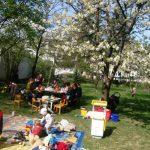 Unter dem blühenden Kirschenbaum - erste ELKI-Runde im Garten!
