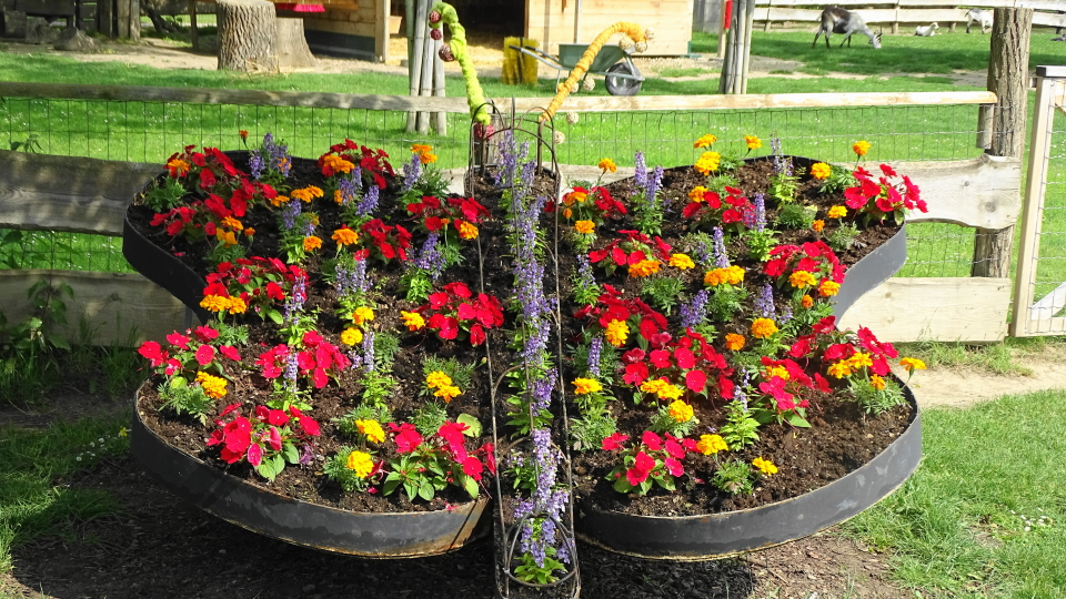 Der Club 60+ Aktiv war in den Blumengärten Hirschstetten (mit Fotos)
