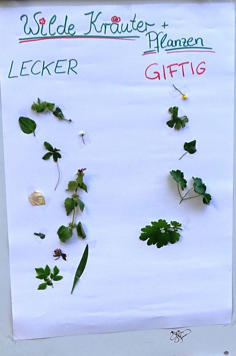 !Verschoben auf den 12. Juni! Was wächst denn da? – 2. Kräuterworkshop im Pfarrgarten danach Gartengottesdienst mit Lobliedern aus den 80-zigern!